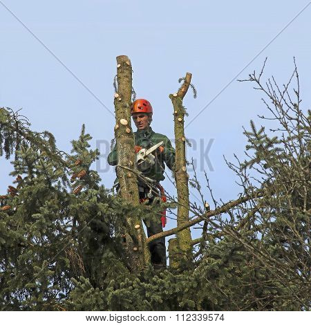 Lumberjack With A Chainsaw, Cutting Down A Tree
