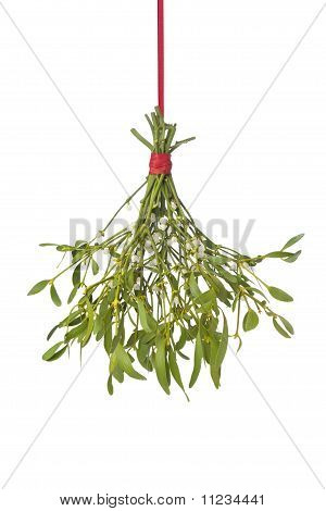 Fresh mistletoe hanging on a red ribbon