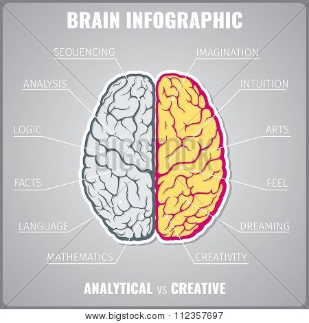 Brain left analytical and right creative infographic vector concept