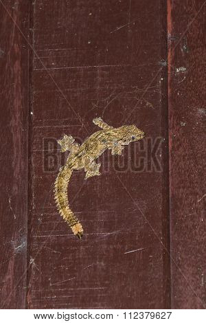 Flying gecko or parachute gecko (Ptychozoon) on the wooden wall, flash fired poster