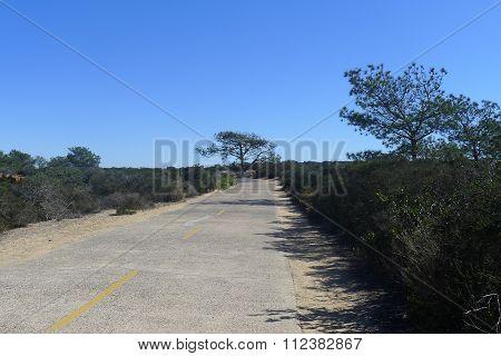 Torrey Pines Park Road in San Diego