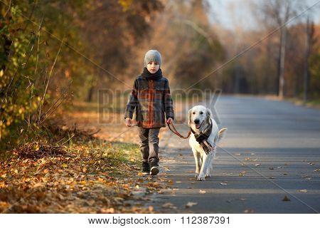 autumn walk with pet
