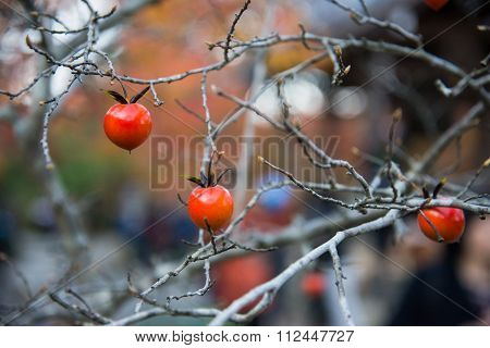 Small Fruit On Dried Branch