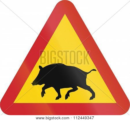 Road Sign Used In Sweden - Wild Boars