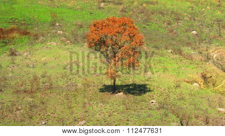 The beautiful color of a lone tree