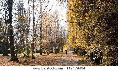 Morning Run In The Park