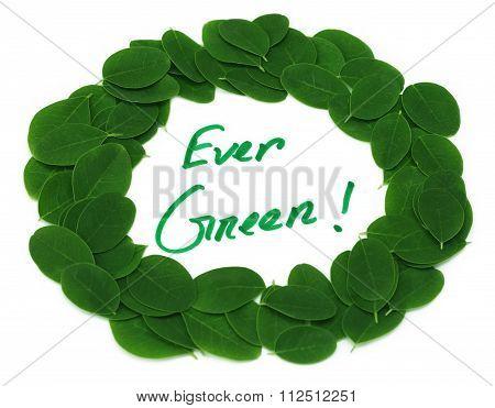 Ever Green Written In Moringa Leaves Frame