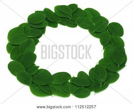 Edible Moringa Leaves Make A Frame