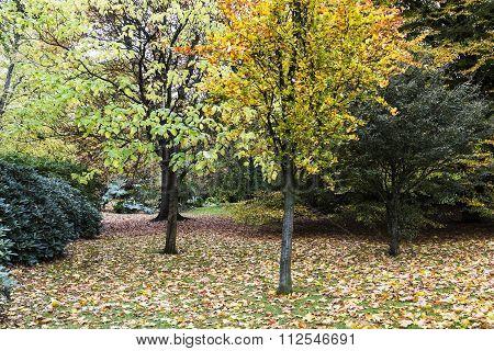 Autumn colours at Glasgow Botanical Gardens Scotland UK