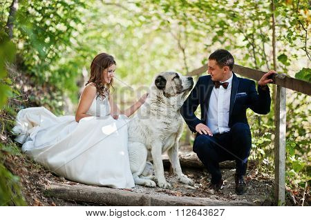 Very Sensual And Gorgeus Wedding Couple On The Picturesque Landscapes With Big Dog