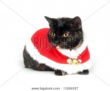 Cat wearing santa suit on white background poster