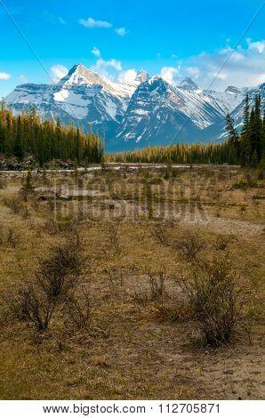 Athabasca Riverbank