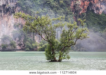 Lone Tree Grows At Railay Beach In Krabi, Thailand