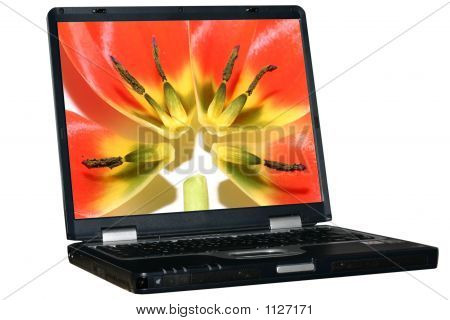 Isolated Laptop With Tulip'S Petals