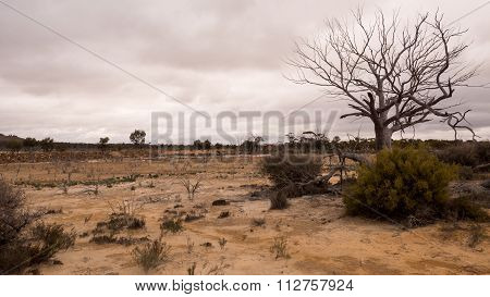 The Australian outback is a harsh environment