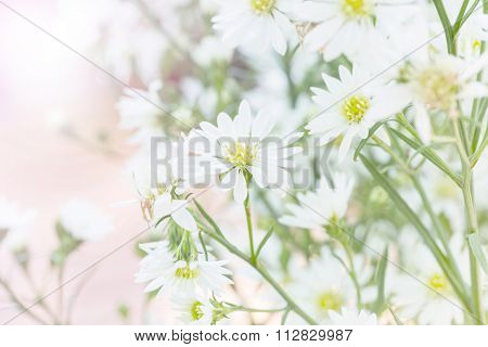 White Cutter Flower