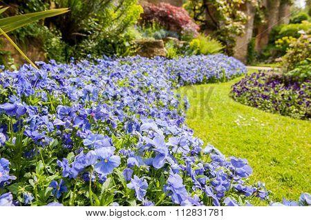 Summer garden color