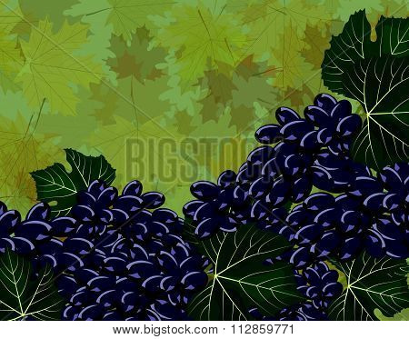 Grapes clusters background