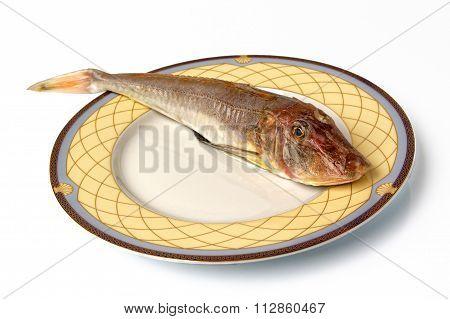 Sea Red Gurnard Gallinella Fish