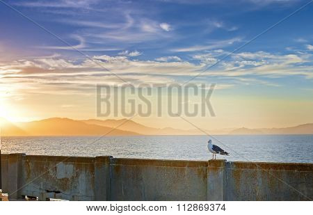 Beautiful Tranquil Seagull Sitting On Railing On San-fransisco Pier During Amazing Sunset Of The Rar