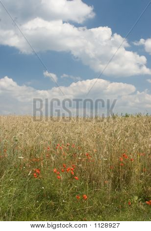 Landscape With Poppies And Wheat