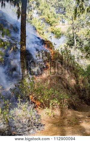 Wildfire In Mountains