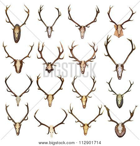 Large Collection Of Isolated Red Deer Hunting Trophies