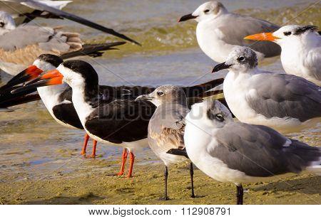 Shore Birds Sunning