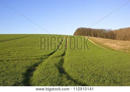 Scenic Wheat Field