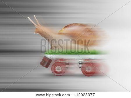 Snail Skating Motion Blur