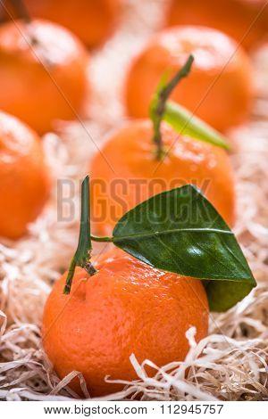 Fresh Tangerines In Tranportation Crate