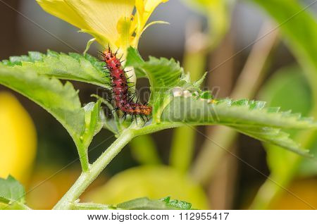 Dark Red Caterpillar On Green Leaf And Yellow Flower