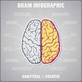Brain left analytical and right creative infographic concept. Art feel dreaming mathematics language facts logic sequential and intuitive. Vector illustration poster