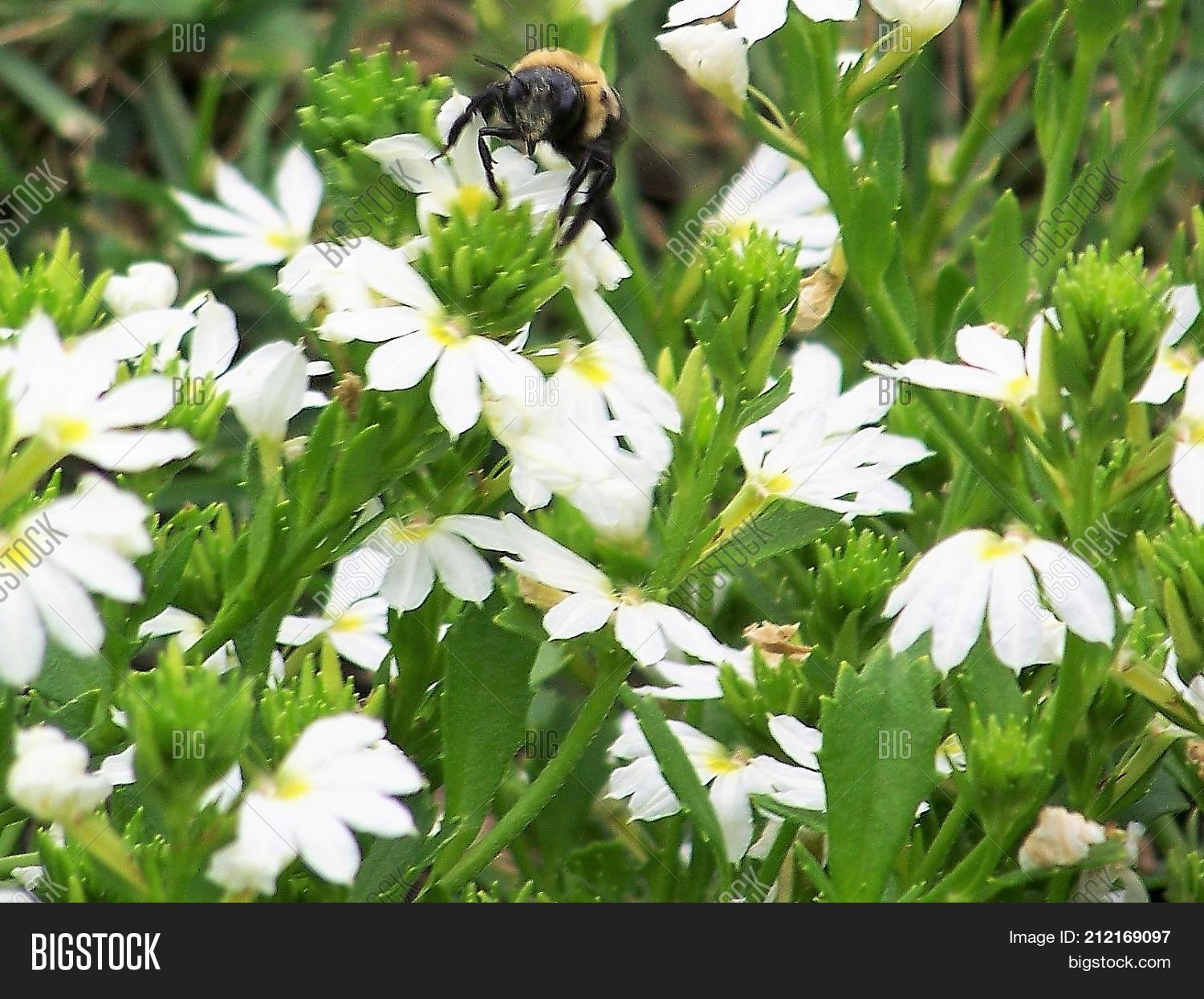 Busy Bug Field White Image Photo Free Trial Bigstock