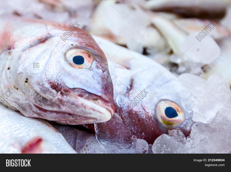 Fresh Fish On Ice Box Image & Photo (Free Trial)   Bigstock