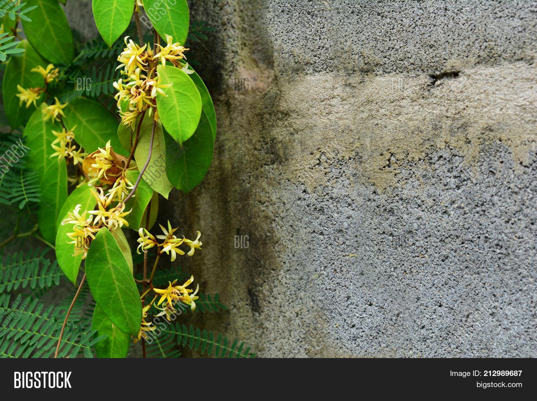 Yellow Vine Flowers Image Photo Free Trial Bigstock