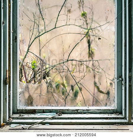 Broken window with fragment and emaciated leaf