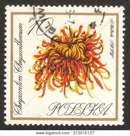 MOSCOW RUSSIA - CIRCA OCTOBER 2017: a post stamp printed in POLAND shows Chrysanthemum flower the series