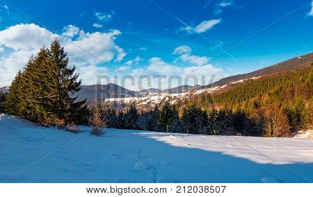 Meadow Among Forest In Winter Mountains
