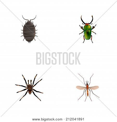 Realistic Gnat, Arachnid, Dor And Other Vector Elements