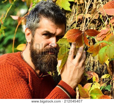 Autumn Season And Masculinity Concept. Man With Serious Face