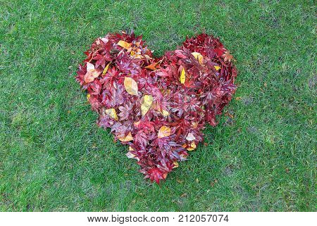 Fallen red maple tree leaves raked into heart shape on green grass lawn in autumn fall season