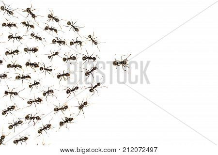 leader ants and servant ant isolated on white background business concept poster