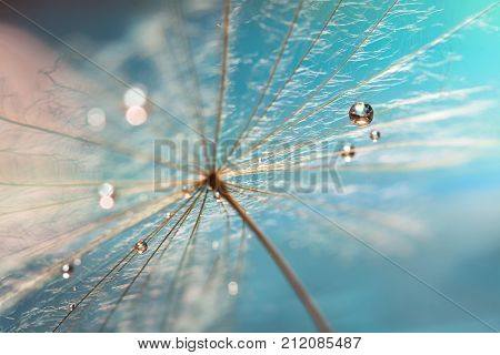 The droplet of water on the seed of dandelion . Dandelion on a turquoise background. Selective focus.
