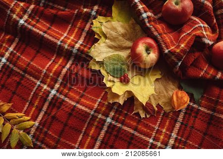 Cosy warm blanket. Autumn apples and fall leaves background