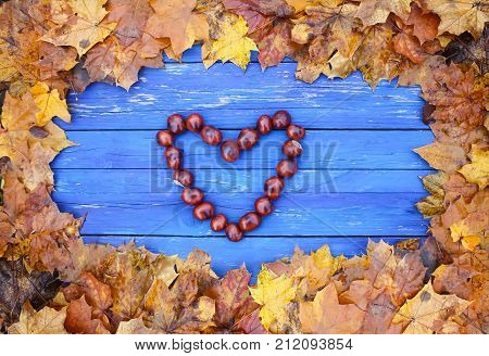 Horse-chestnuts or Aesculus hippocastanum fruits in autumn.