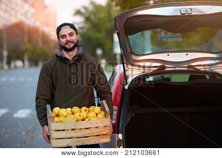 Man with wooden box of yellow ripe golden apples at the orchard farm loads it to his car trunk. Grower harvesting in the garden is with organic apple crate. Harvest Concept. Housewifely male bought fruits to bring them home for the family.