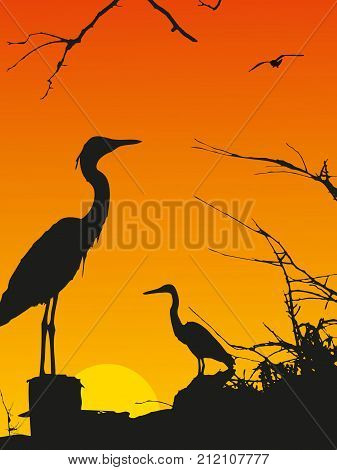 Silhouette of a stork at sunset. Vector illustration.