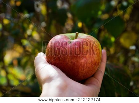 Red apple in a hand in front of green background