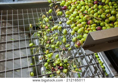 Olive Cleaning Phase
